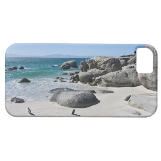 African Penguins, formerly known as Jackass 3 iPhone 5 Covers