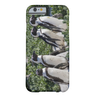 African Penguins, formerly known as Jackass Barely There iPhone 6 Case