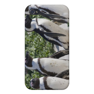 African Penguins, formerly known as Jackass iPhone 4 Covers