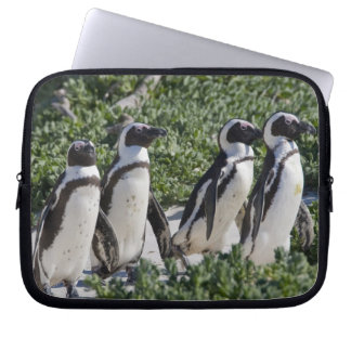African Penguins, formerly known as Jackass Laptop Sleeve