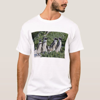 African Penguins, formerly known as Jackass T-Shirt
