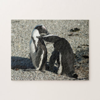 African Penguins grooming each other Puzzles