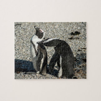 African Penguins grooming Jigsaw Puzzle