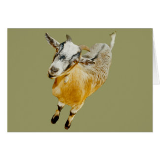 African Pygmy Goat Greeting Card