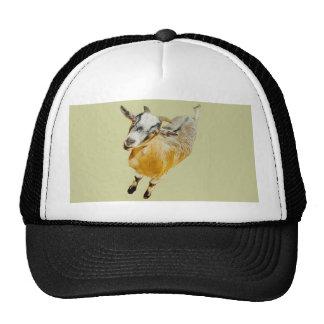 African Pygmy Goat Mesh Hats