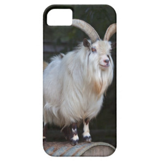African Pygmy Goat iPhone 5 Case