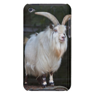 African Pygmy Goat iPod Touch Case