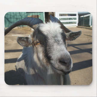 African Pygmy Goat Mouse Pad