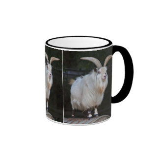 African Pygmy Goat Mug