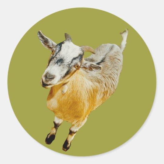 African Pygmy Goat Round Sticker