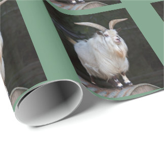 African Pygmy Goat Wrapping Paper