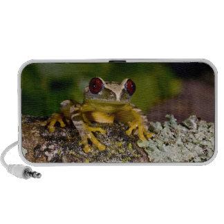 African Red Eye Treefrog, Leptopelis 2 Notebook Speakers