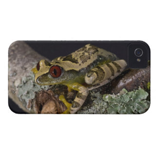 African Red Eye Treefrog, Leptopelis iPhone 4 Case-Mate Case