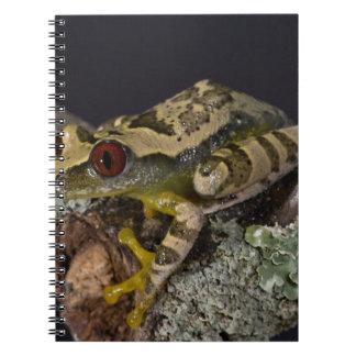 African Red Eye Treefrog, Leptopelis Notebook