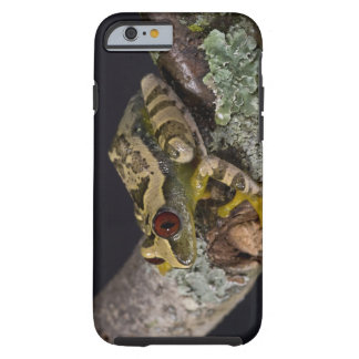African Red Eye Treefrog, Leptopelis Tough iPhone 6 Case