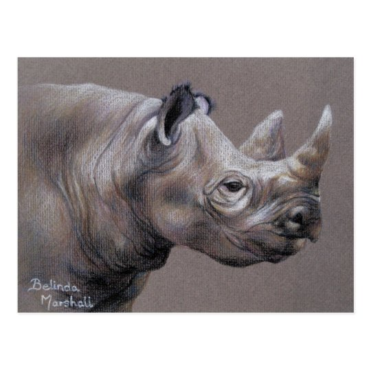 African Rhino Drawing Postcard