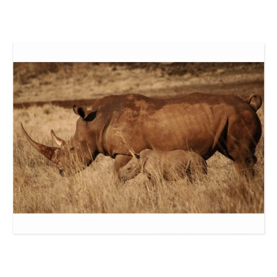 African Rhino mum and baby Postcard
