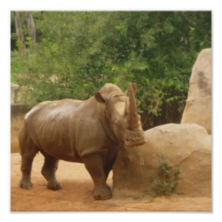 African Rhino on Canvas Posters