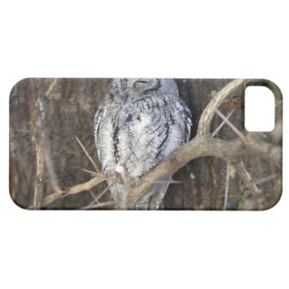 African Scops-Owl, Kruger National Park, South Barely There iPhone 5 Case