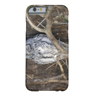 African Scops-Owl, Kruger National Park, South Barely There iPhone 6 Case