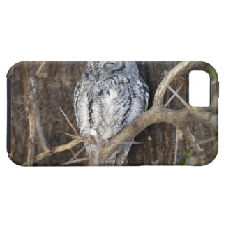 African Scops-Owl, Kruger National Park, South iPhone 5 Cases