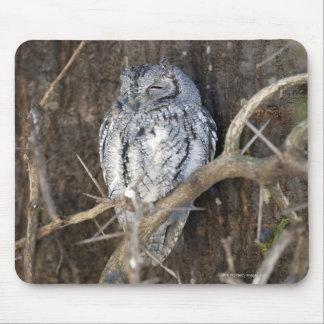 African Scops-Owl, Kruger National Park, South Mouse Pad