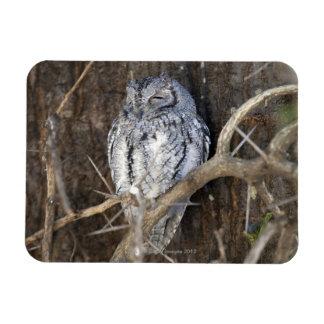 African Scops-Owl, Kruger National Park, South Rectangular Photo Magnet