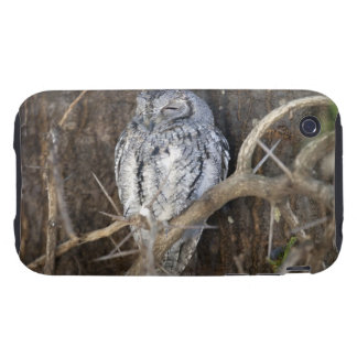African Scops-Owl, Kruger National Park, South Tough iPhone 3 Cases