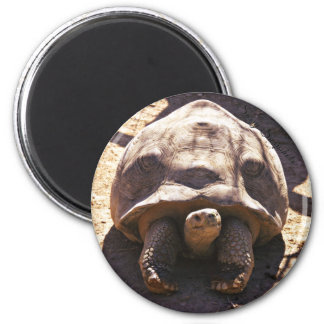 African Spurred Tortoise 6 Cm Round Magnet