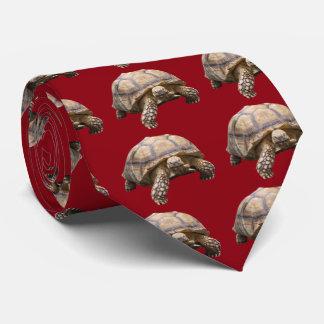 African spurred tortoise tie
