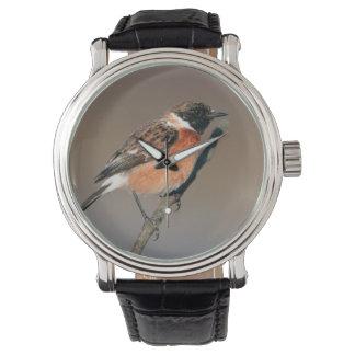 African Stonechat (Saxicola Torquata) On Twig Watch
