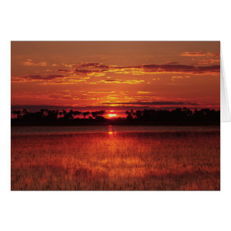 African sunset Okavango Delta, Botswana 2©All righ Card