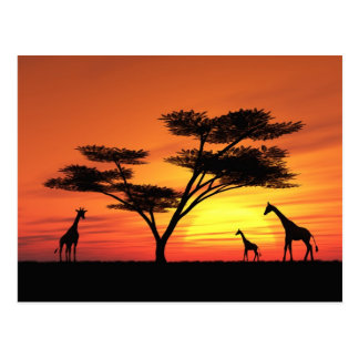 African Sunset Postcard