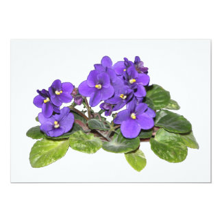 African violet 13 cm x 18 cm invitation card