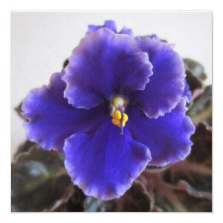 African Violet Blooming 13 Cm X 13 Cm Square Invitation Card