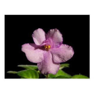 African Violet Flower Postcard