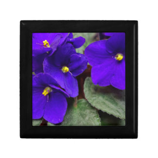 African Violet Gift Box