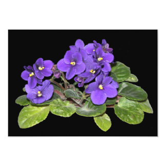 African violet announcement