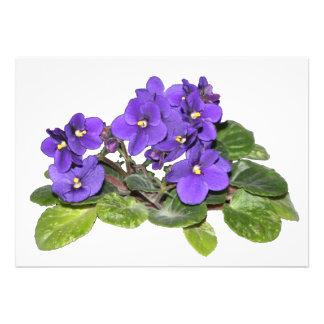 African violet cards