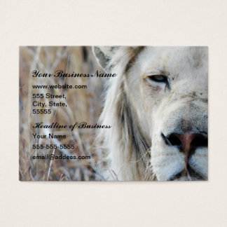 African white lion resting