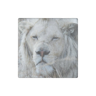 African white lion resting stone magnet
