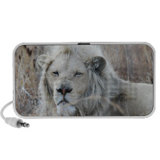 African white lion resting portable speakers
