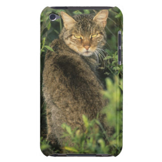 African Wild Cat Felis libyca ancestor of iPod Touch Covers