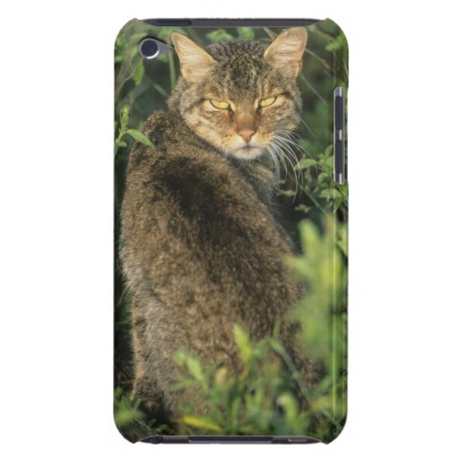 African Wild Cat, Felis libyca), ancestor of iPod Touch Covers