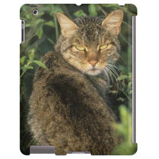 African Wild Cat, Felis libyca), ancestor of iPad Case