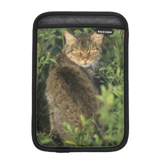 African Wild Cat, Felis libyca), ancestor of iPad Mini Sleeve