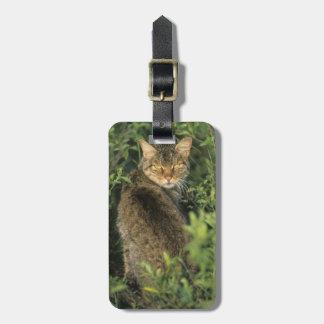 African Wild Cat, Felis libyca), ancestor of Luggage Tag
