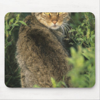 African Wild Cat, Felis libyca), ancestor of Mouse Pad