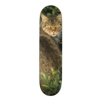 African Wild Cat, Felis libyca), ancestor of Skateboard Deck