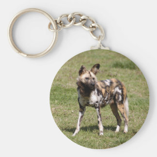 african-wild-dog-015 key ring